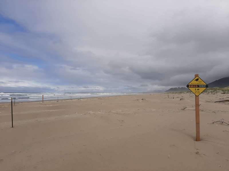 A sign on the beach warning hikers about nesting plovers.