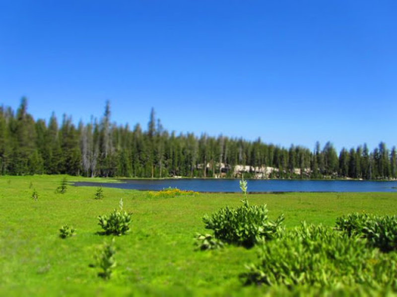 View of Wheeler Lake (before the cows arrive).