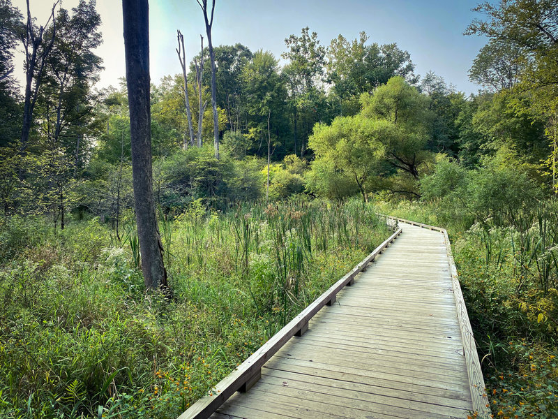 Boardwalk section of Holbrook Hollows' Old Ironsides Run.