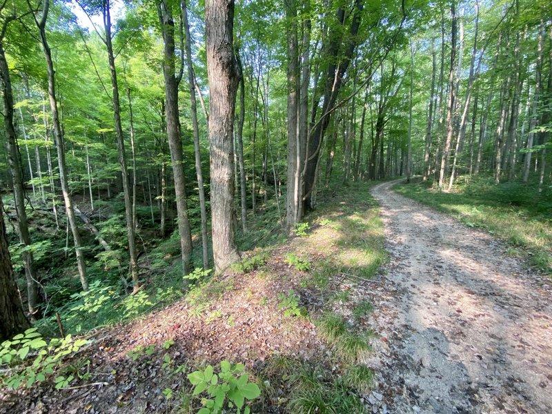 The natural hollows adjacent to Holbrook Hollows' Timber Ridge Trail.