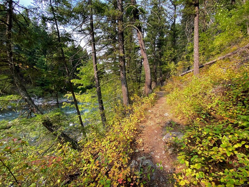 The undergrowth showing fall colors as the trail twists up the hill.