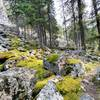 Mossy boulders along the trail.