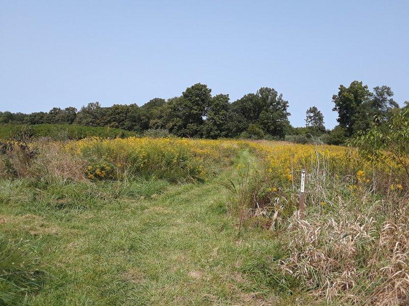 Old field