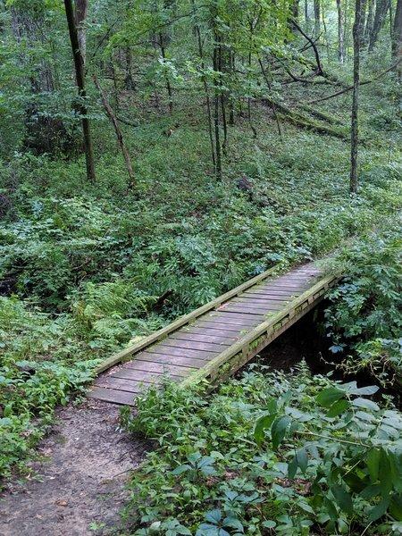Fun bridge in the forest