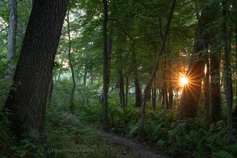 Morning sunburst - Dune Ridge Trail, Indiana Dunes National Park