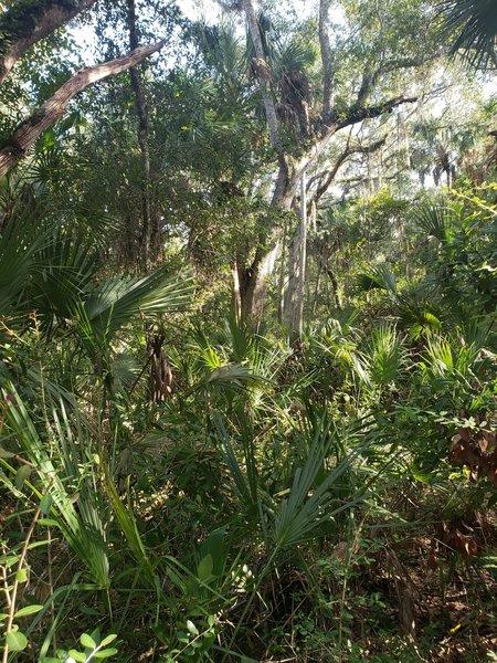 Lots of vegetation providing for a shady hike.