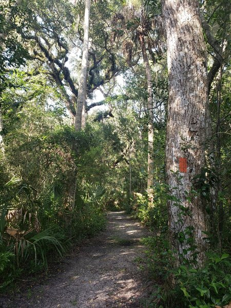 The trail is well marked and the width and surface make it ideal for trail runners.