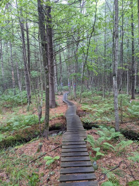Great boardwalk sequence over a lush stream about halfway through the trail