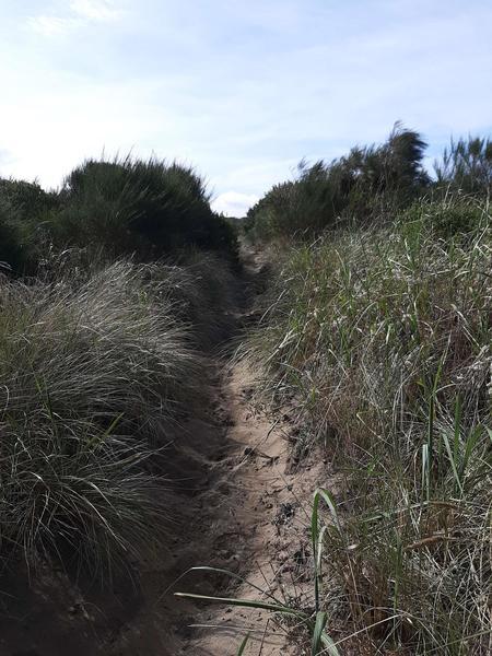 A sandy trail winds through beach grass