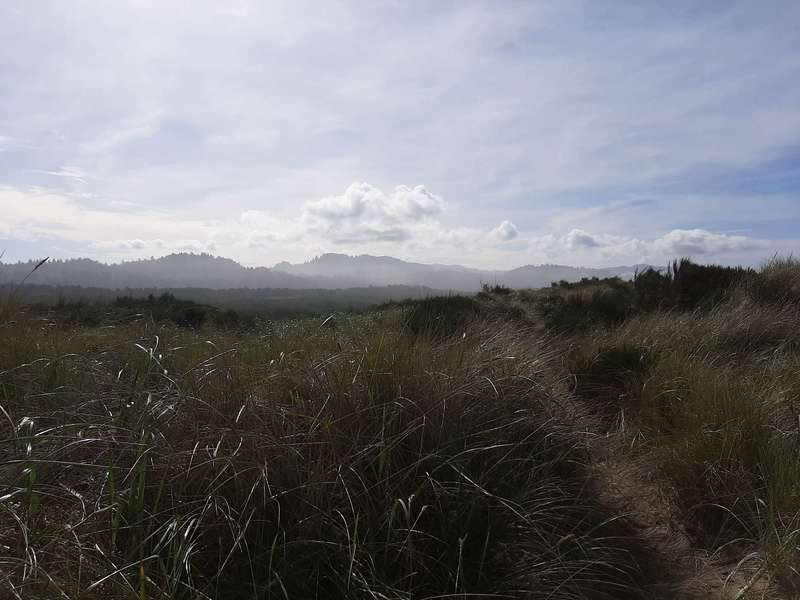 A sandy trail mostly hidden by dune grass heads towards distant hills.