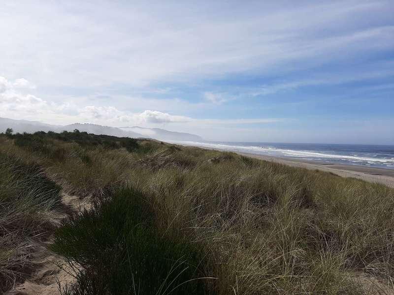 A sandy trail parallels the ocean through the dune grass.