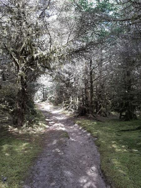 A wide sandy track leads through a mossy shore pine forest.