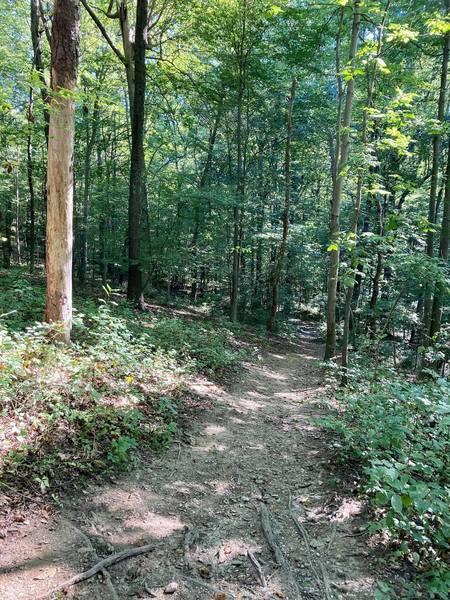 Downhill at Purdum Trail