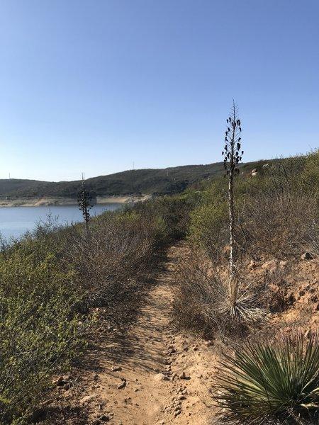 Witch Trail