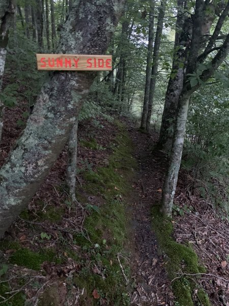 """""""Sunny Side"""" is a segment about 8 miles into the mtb trail, which you can hike without fuss as I have yet to see but one other person there along the whole route. Beautiful trail, lots of deer and squirrels this time of year."""