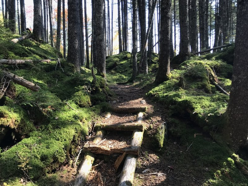 Stairs through the mossy knolls.