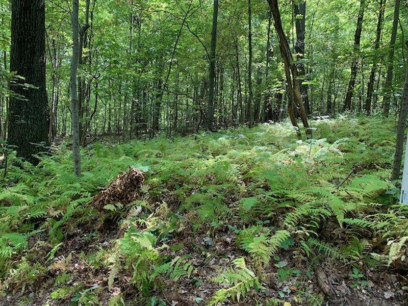 A sea of ferns...