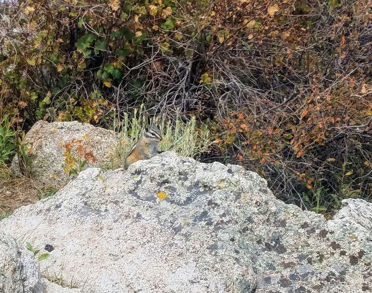 Chipmunk visit on Summit of Signal Butte