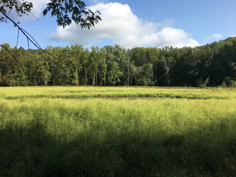 First Creek Lake... or grassy marsh mud pit.