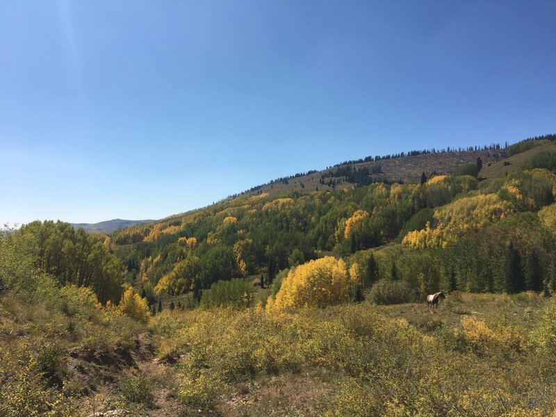 Horse in the open meadow, with aspens changing on the hillside.