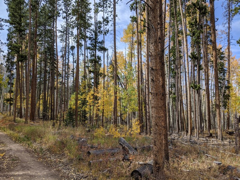 The trails in the Rainbow Lake area are an easy spot to see fall color, and the crowds disappear once you get past the lake.