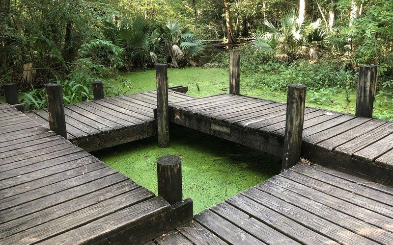 Pond observation platform at the Edith L. Moore Nature Sanctuary.
