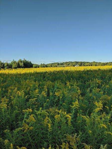 Great summer wildflowers