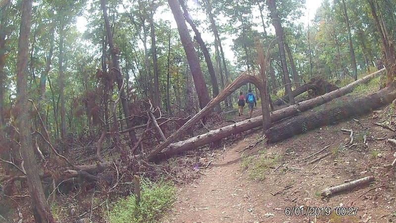 Fallen tree arch.