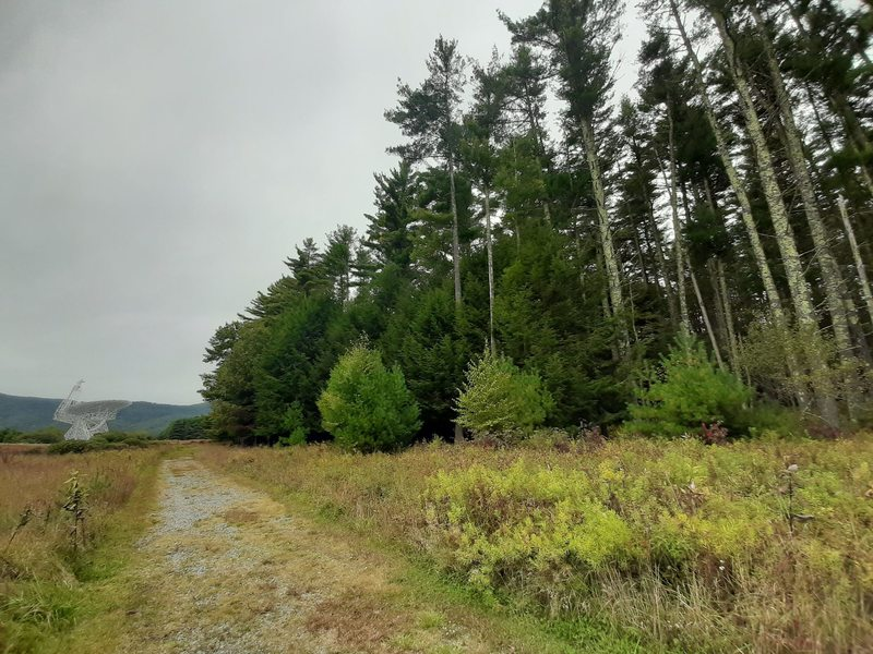 The Nature Trail leads visitors past towering conifers and straight to the Green Bank Telescope.