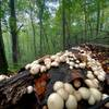Mushrooms are ready to explode