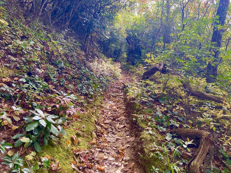 Challenging climbs on singletrack in dense forest.
