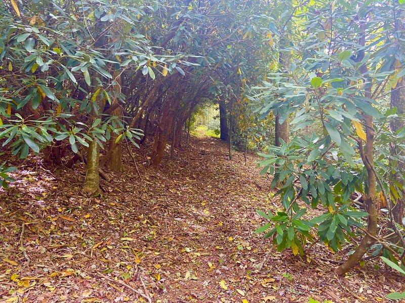 Tunnel of foliage