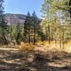 Meadow between canyon walls.