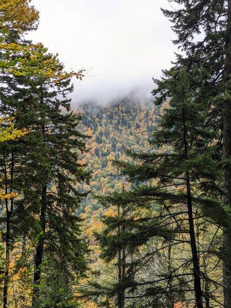 Looking at Anakeesta Ridge through the trees.