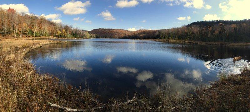 Grass Pond (with a golden retriever)