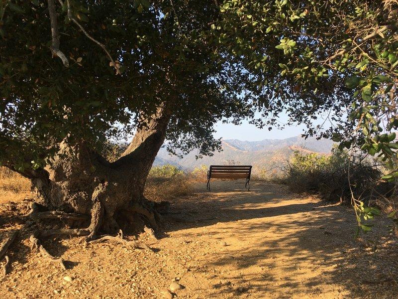 Lone Oak with shady bench!