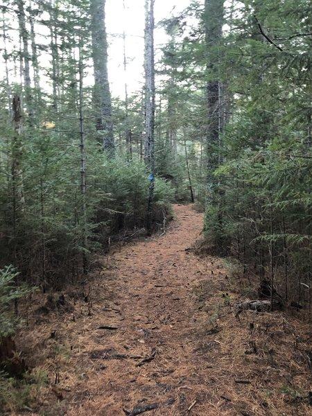Oliverian Brook Trail