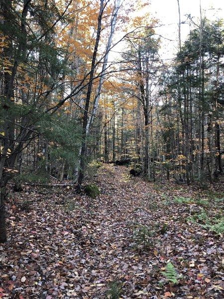 Oliverian Brook East Loop Trail