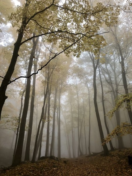 Foggy trail.