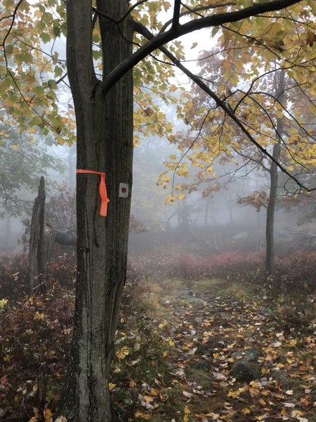 Makeshift trail blazes along this stretch.