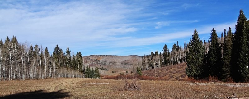 Looking back towards the trailhead of the Beaver Creek Trail.