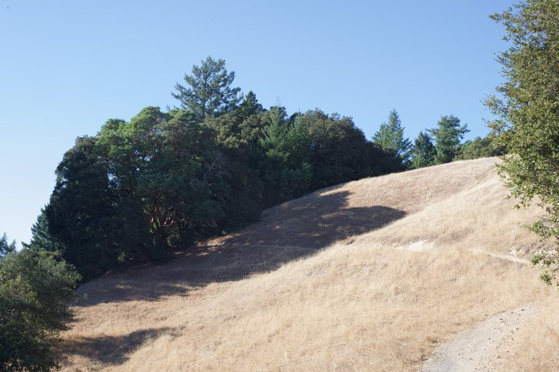 The Saratoga Gap Trail passes through an open field along Skyline Blvd. before entering the woods.