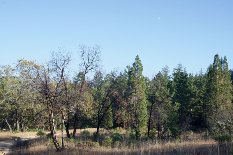 The trails open up around the intersection of Charcoal Road and the Table Mountain Trail.
