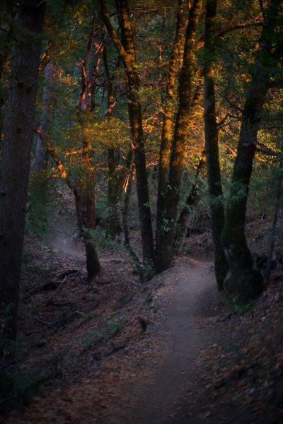The light at Golden Hour peeks through the trees along the Saratoga Gap trail around sunset.  The light peeks through the trees along the trail making beautiful scenes at various points in the hike.