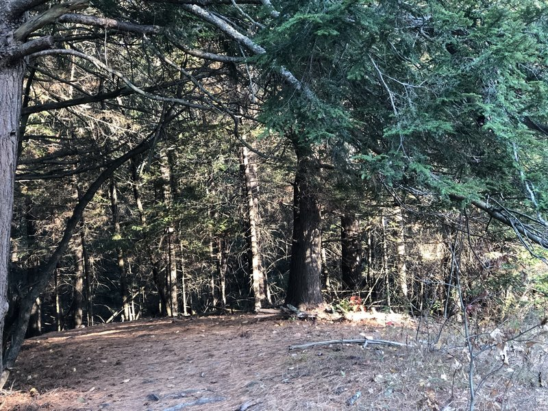 Nice stroll through the woods.