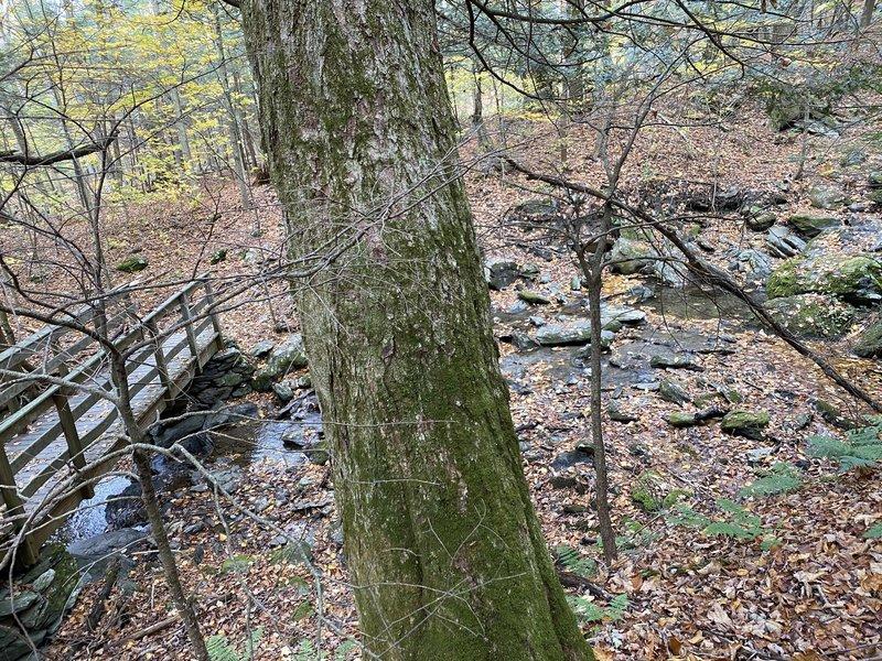 Bridge over Lenox Brook