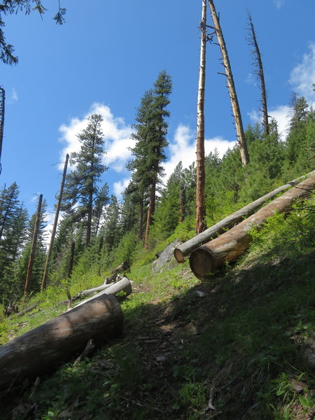 One of the ocasional switchbacks climbing out of Mill Creek Canyon.