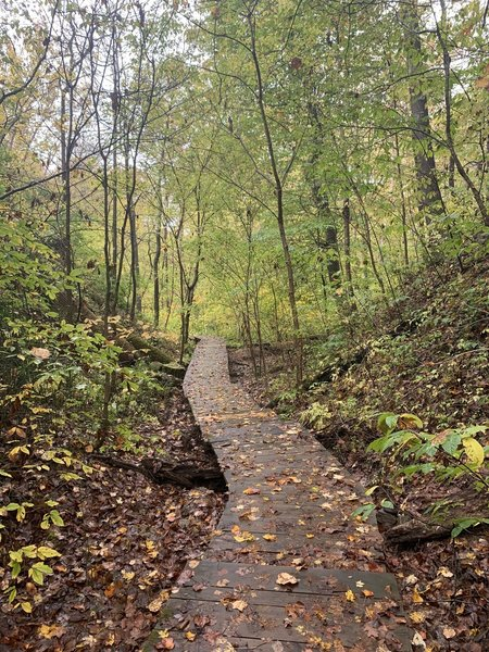 Part of the trail that is in the ravine.