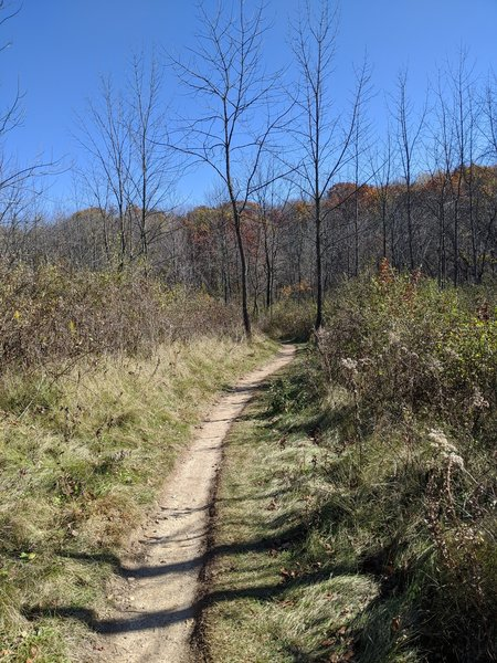 One of the prairie sections.