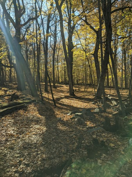 The trail obscured by leaves.